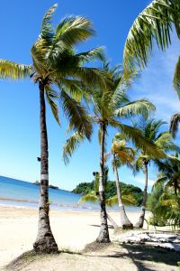 1154617_paradise_palms